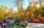 Календарь цветения