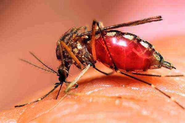 Аллергия на укус комара у ребенка