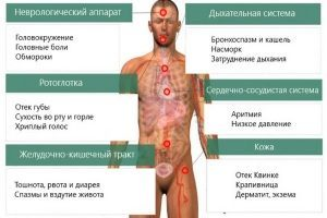 Аллергия на йорка что делать