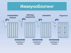 Педиатрическая панель аллергенов инвитро