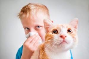 Аллергия на кошачью шерсть лечение