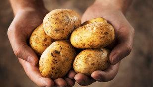 Аллергия на картошку у ребенка
