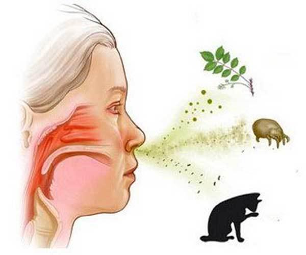 На что бывает аллергия сто к одному