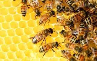 Аллергия от укуса пчелы