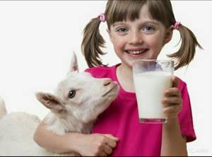 Козье молоко от аллергии