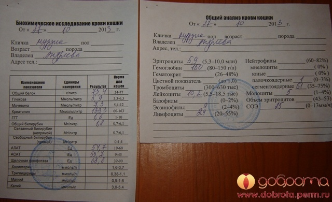 Как определить аллергию по общему анализу крови