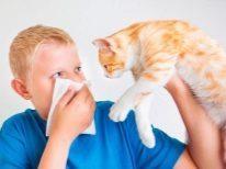 Как лечиться от аллергии в домашних условиях