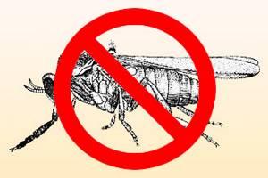 Аллергия на укусы насекомых лечение