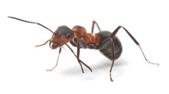 Аллергия на укусы насекомых у детей