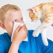 Как называется анализ на аллергию