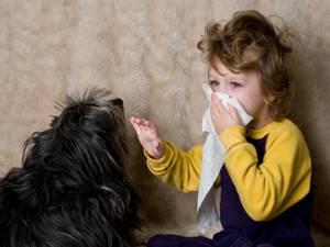 На каких животных нет аллергии