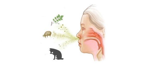 Аллергия с температурой у взрослого