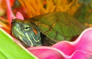 Бывает ли аллергия на черепах