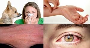 У щенка аллергия что делать