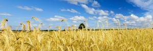 Чем заменить пшеничную муку при аллергии