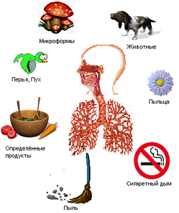 Дерматическая аллергия