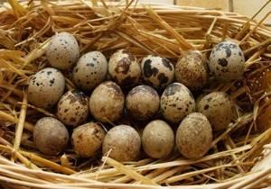 Перепелиные яйца от аллергии