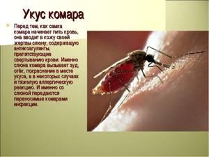 Как выглядит укус комара