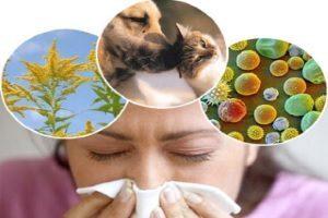 Панель аллергенов респираторная