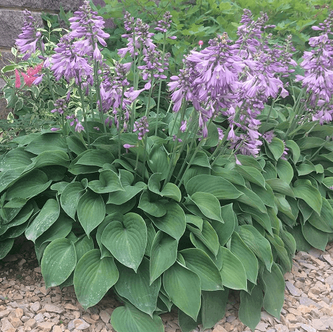 В августе что цветет