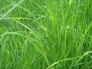 Травы сорные