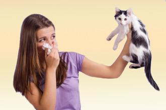 Как избавиться от аллергии на шерсть