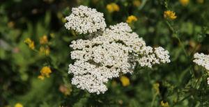 Травы от аллергии на коже