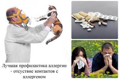 Что такое сенная лихорадка