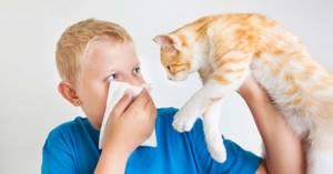 У грудничка аллергия на шерсть