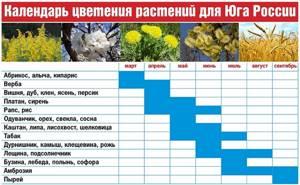 Амброзия цветение