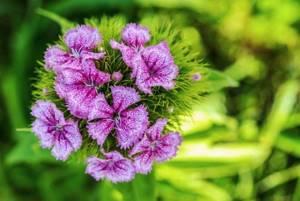 Что цветет в июне