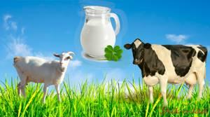 Козье молоко при аллергии у ребенка