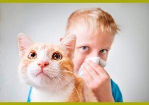 Аллергия на животных симптомы