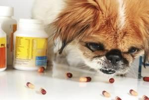 Аллергия у щенка симптомы