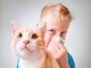 Животные на которых нет аллергии