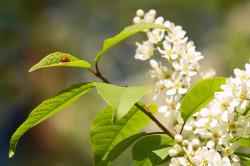 Аллергия на сорные травы