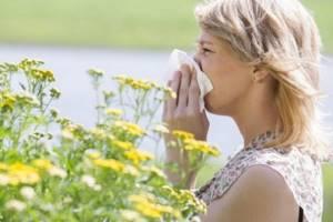 Растения аллергены список самых популярных