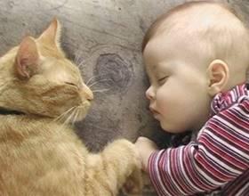 Аллергия на животных у новорожденных